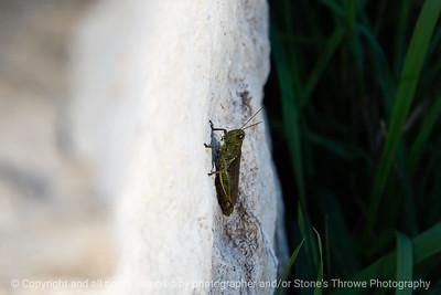 015-grasshopper-wdsm-16oct18-09x06-009-500-8372