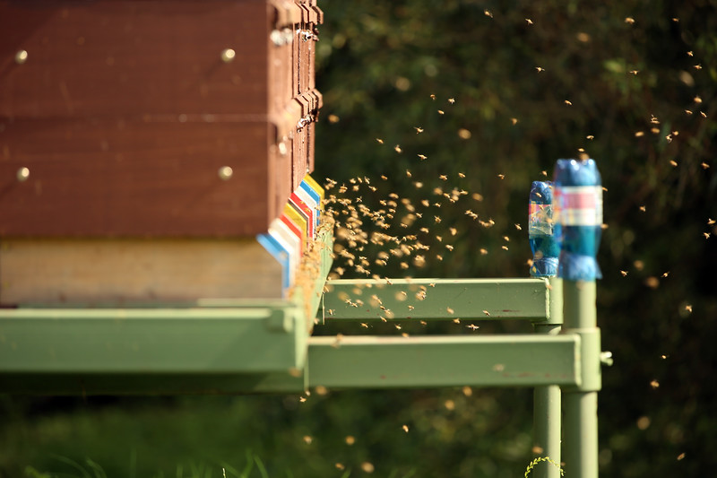 Bee Hives, Rokytník Bee Farm, Včelí farma Rokytník, Hronov, Czech Republic