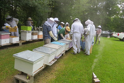 working front row of hives