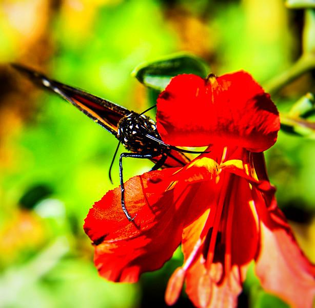 Red Flower Butterfly 23