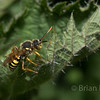 Bee Sp, Nomad Bee 2