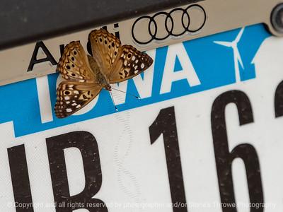 015-butterfly-wdsm-24jun21-12x09-002-3240