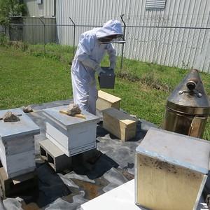 Glen in bee yard