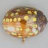 Paropsisterna sp. (Chrysomelidae, Chrysomelinae)