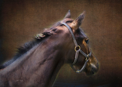 dark brown texture added over photo and various hand touchups to define and create  focused light on filly