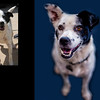 Shelter dog portraits