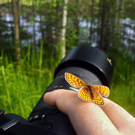 Small Butterfly Lands on the Hand of Photographer Aaron Northcott Whilst Shooting