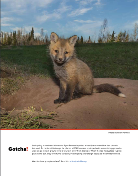 """Featured """"Gotcha"""" image of the May/June 2017 Issue of the Wildlife Professional"""
