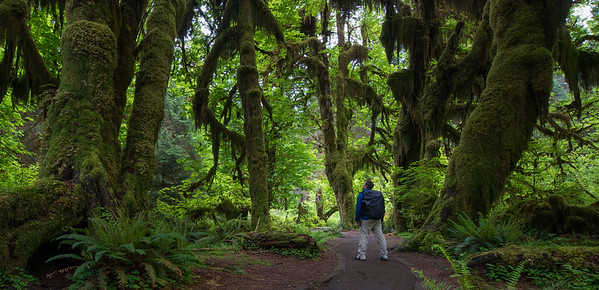 At the Hoh Rain Forest, Washington state, USA