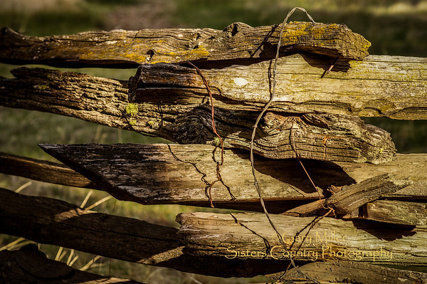The Fence - Gary N. Miller - Sisters Country Photography