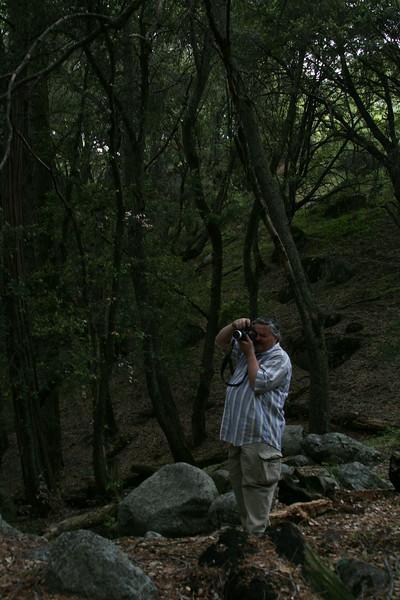 Sequoias 7432