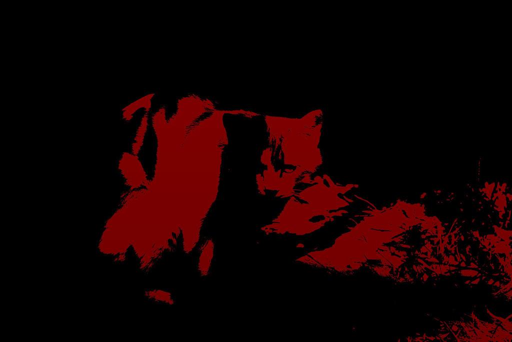 Beijing Cat © Lewis Sandler Beijing Video Studio