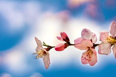 Beijing Spring (北京的春天)