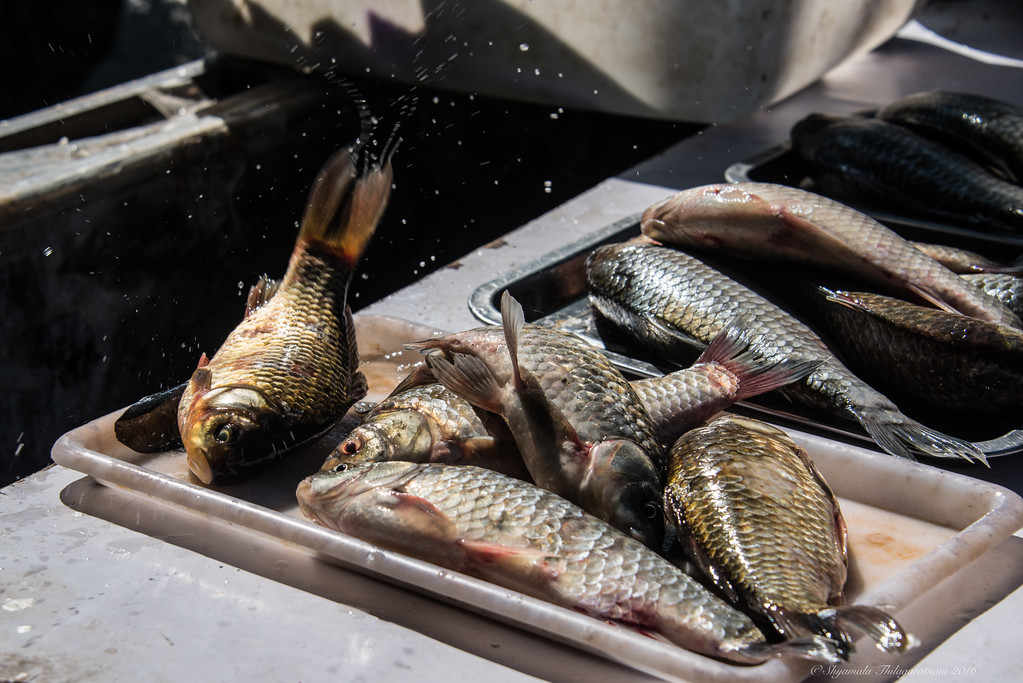 Some very fresh (and one live) fish