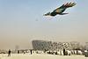 Un homme faisant voler un cerf-volant en forme d'oiseau devant le stade olympique de Pékin, lui-même élaboré sur le concept d'un nid d'oiseau. Beijing/Chine