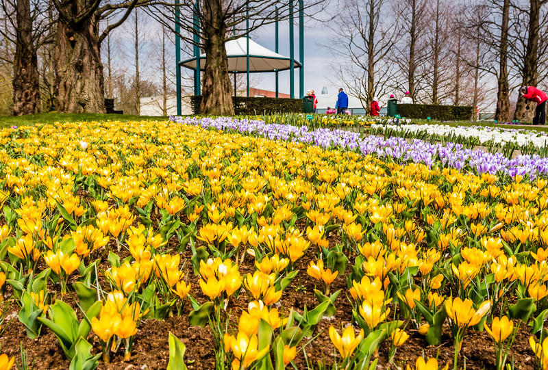 THE NETHERLANDS-LISSE-KEUKENHOF
