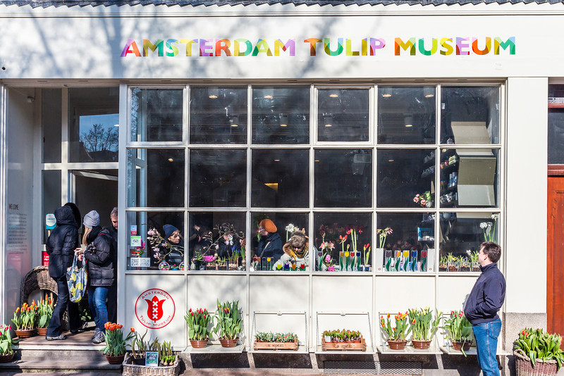 THE NETHERLANDS-AMSTERDAM-TULIP MUSEUM