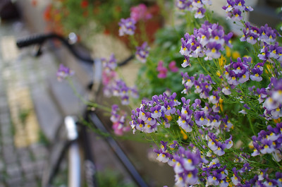 Bicycle and Flowers in Bruges