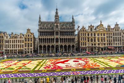 Flower carpet 2016 in Brussels
