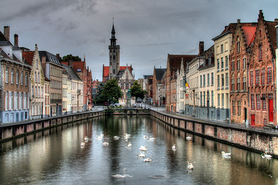 Bruges Swans in the Morning