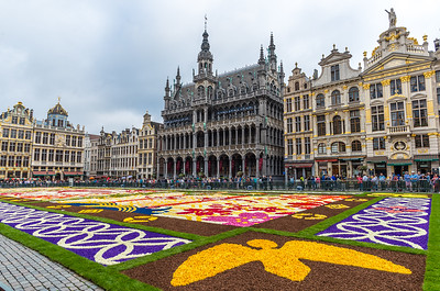 Flower carpet 2016 in Brussels