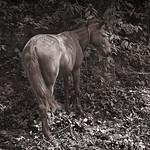 Punta Gorda Horse