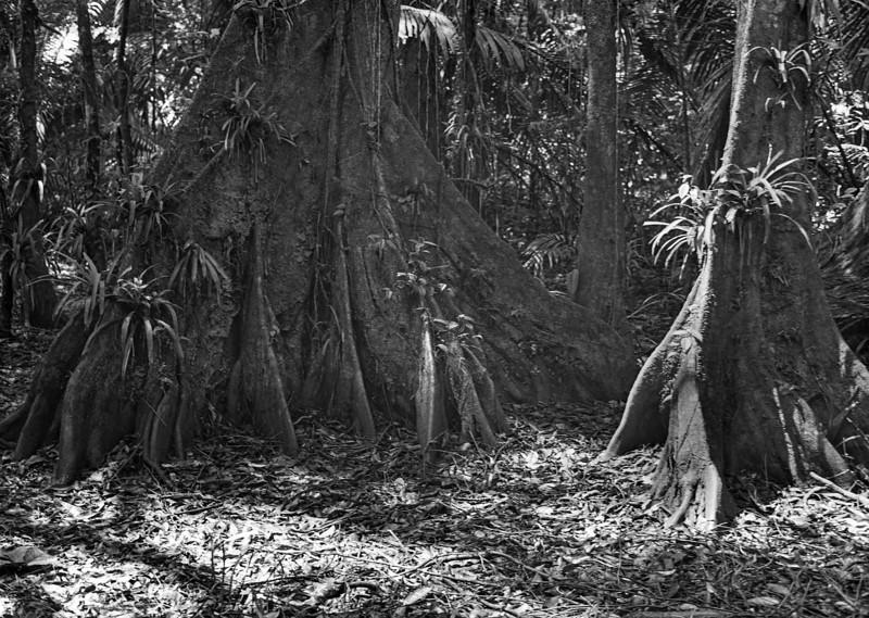 Cockscomb Basin Jaguar Preserve Trees