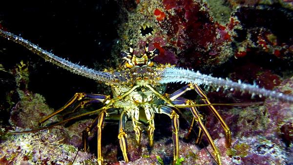 Belize Ambergris Caye Diving