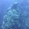 Nurse Shark bumps camera repeatedly