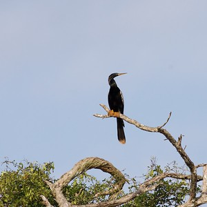 Best of Belize Birding