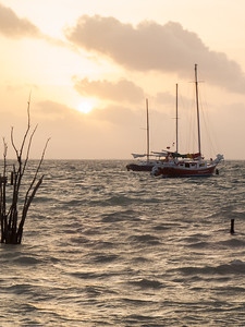 Delightful Sails
