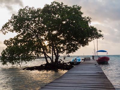 Tree dock