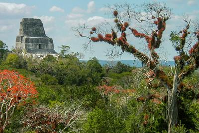 Temple 4 and Ceiba Tree