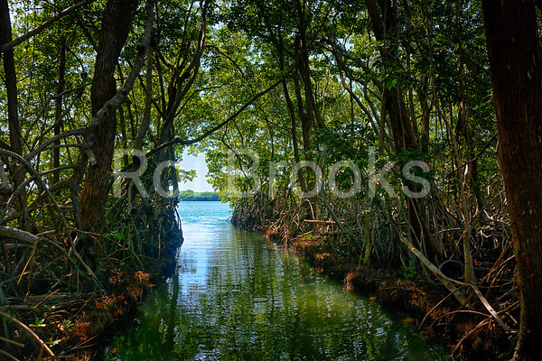 Anderson's Lagoon - Sittee River