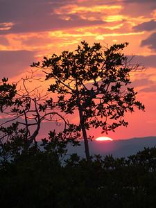 Caribbean tree sunset