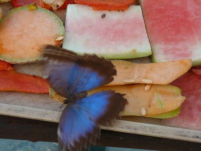 Motylek - ujÄ™cie mamy