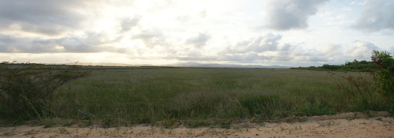 Wetlands near Hopkins Village