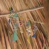 Fish stringer hanging in palapa