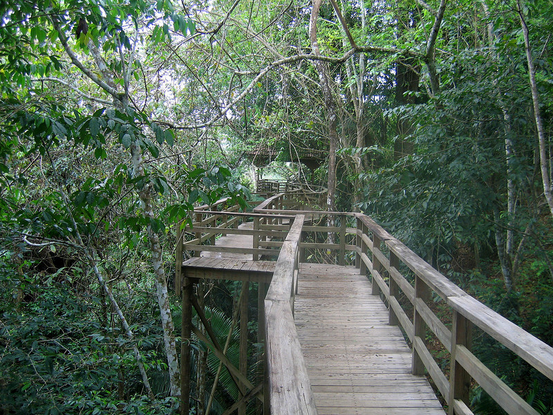 A walkway in the forest canopy stretches from the restaurant at duPlooy's and provides glimpses of the Macal river far below.