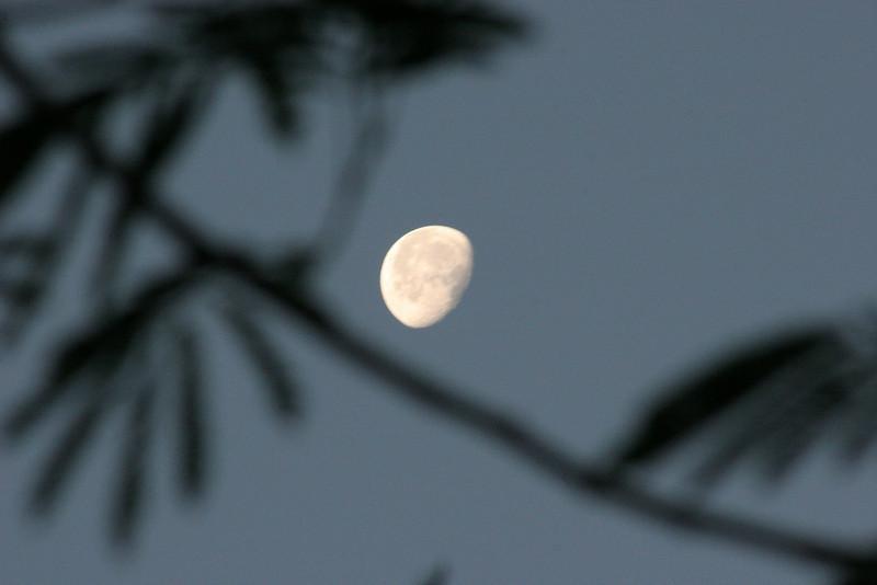Bright moonlit nights.