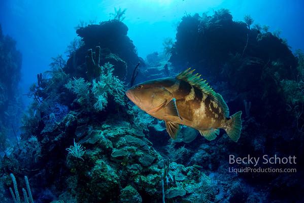 Friendly grouper