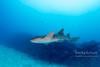 Friendly nurse sharks of Hol Chan reef