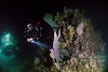 Night dive - renta and sea fan