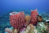 Big barrel sponges