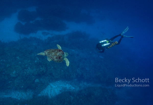 Diver dive bombed by turtle