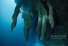 Blue Hole stalactites with a diver