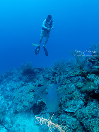 diver with nurse sharks Hol Chan