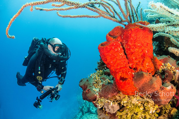 CCR diver checking out a sponge on Turneffe Atoll
