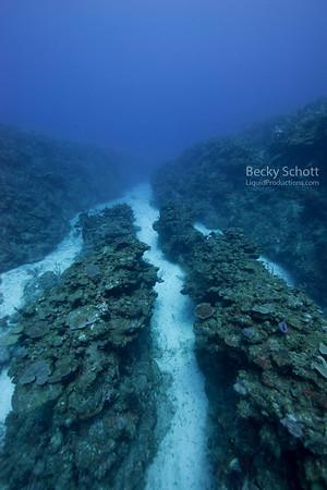 Reef fingers