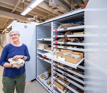 Dr. Sharon Jansa with Bell Museum Collection